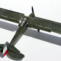 storch1