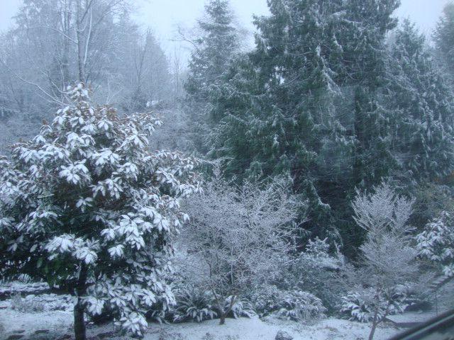 Snow 14 1